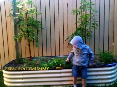 veggie garden watermark